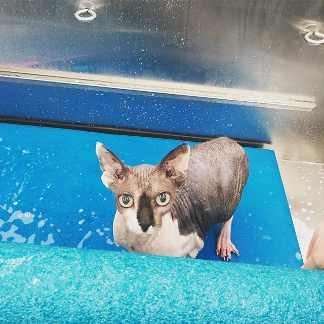Del Mar Photography Image Gallery Of Cat Groomer Solana Beach