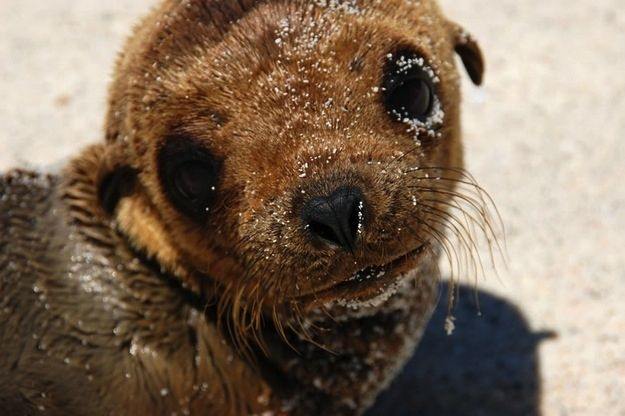 Seal Pups That Will Make You Want To Rip Your Hair Out With Cuteness