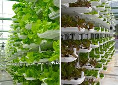 VertiCrop Processes 10,000 Plants Every 3 Days Using Vertical Hydroponic Farming VertiCrop Farming by Valcent Products – Inhabitat - Green Design, Innovation, Architecture, Green Building