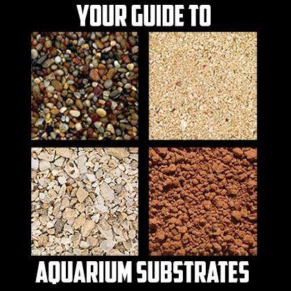 Your Guide to Aquarium Substrate - Aquarium Backgrounds