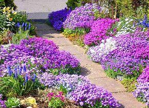 13 очаровательных низкорослых цветов.
