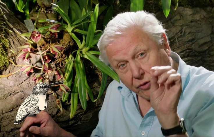 David Attenborough discovers Tettenvogel on his birthday! Happy birthday, Sir David!