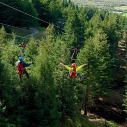 Zoom Zipline Rotorua activity in action