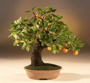 The fruit and branches of this artificial tree are created from luna clay, making them very flexible and therefore can be adjusted to your p...