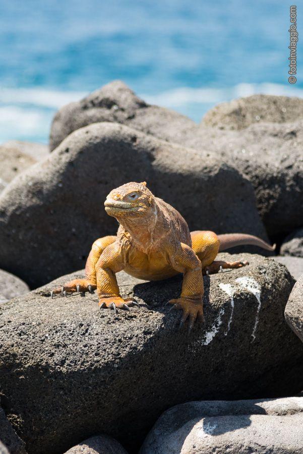 Galàpagos - Seymour Norte