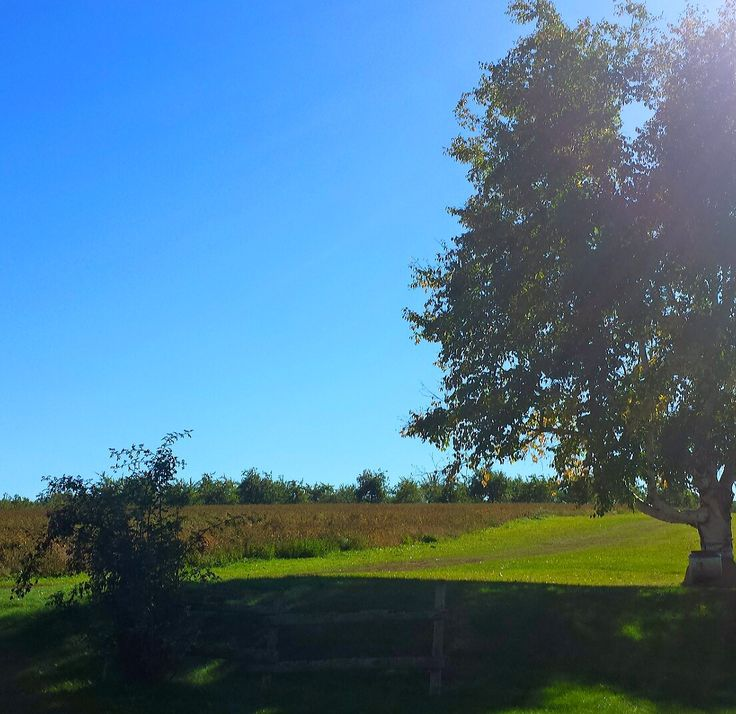 Beautiful day! #annapolisvalley #novascotia #autumn #hennigarsfarmmarket #orchards