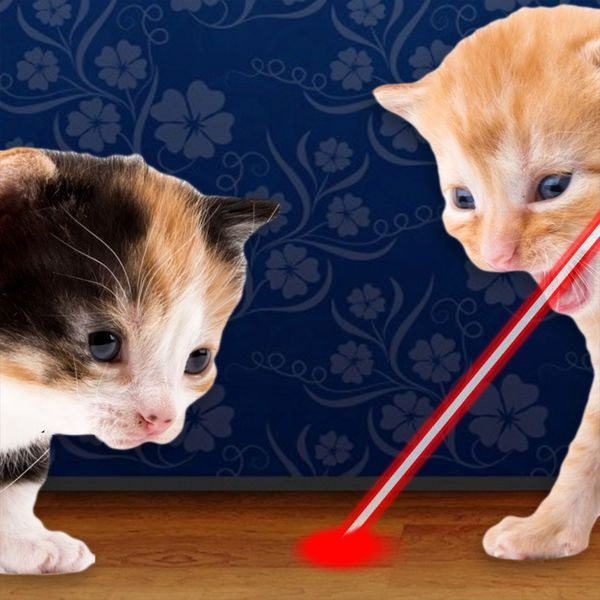 Download IPA / APK of Laser Pointer for Cat for Free