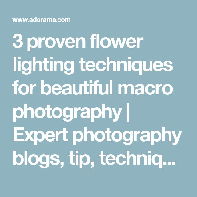 3 proven flower lighting techniques for beautiful macro photography | Expert photography blogs, tip, techniques, camera reviews - Adorama Learning Center