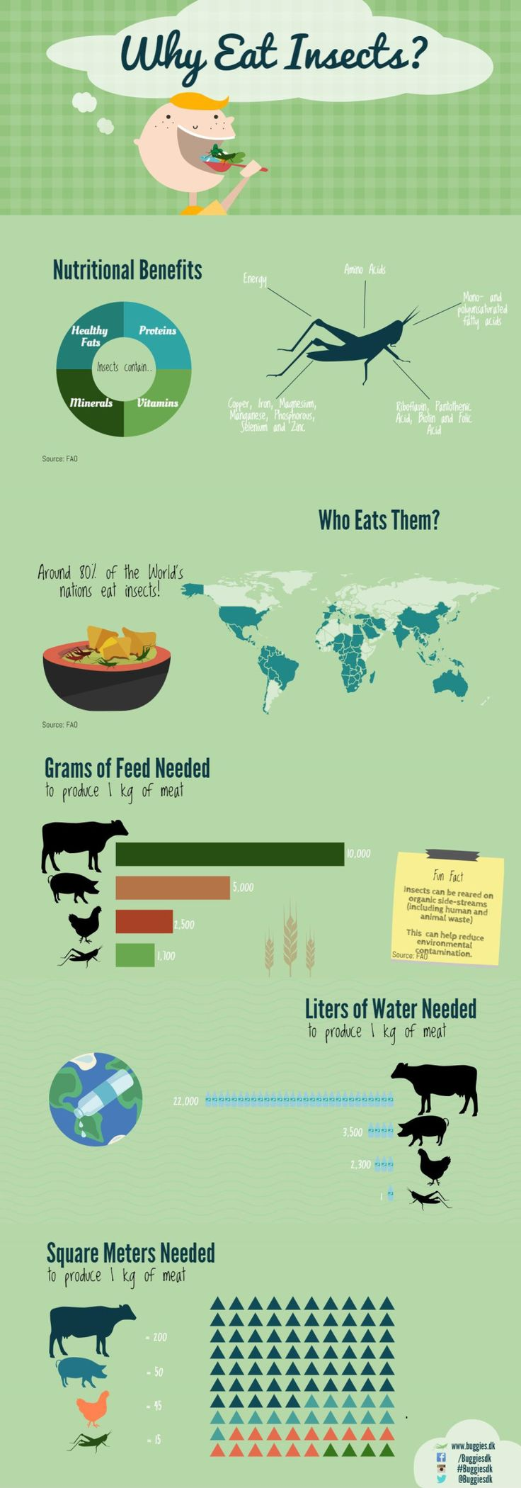 Buggies Infographic - Why eat insects