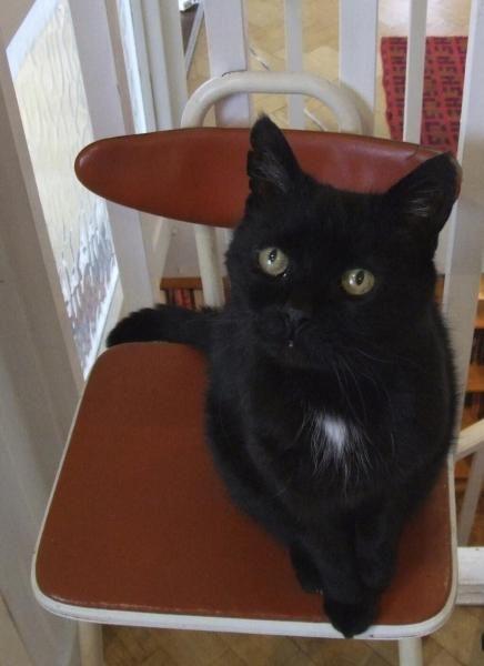 Top 8 Famous Black Cats | International Cat Care