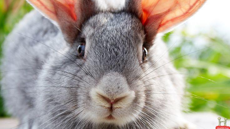 rabbit-wallpaper-7