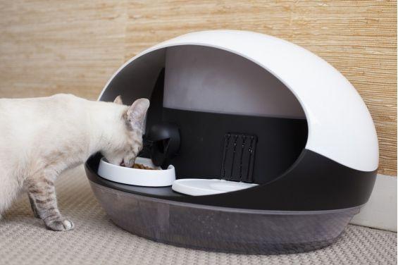 Prendre soin de son chat même si l'on est loin de lui, c'est possible grâce au distributeur de nourriture connecté et intelligent Catspad