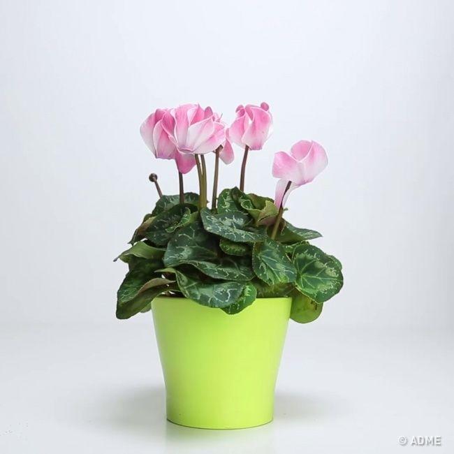 Секрет, который вернет жизнь любимому растению! » Женский Мир
