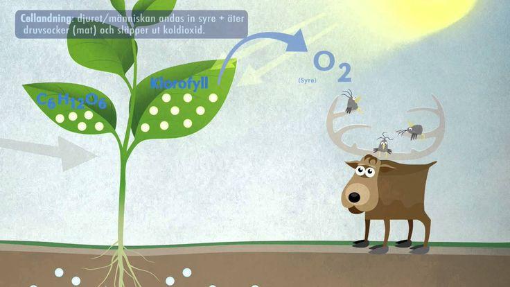Biologi åk 1-3. Fotosyntes. Youtubefilm.