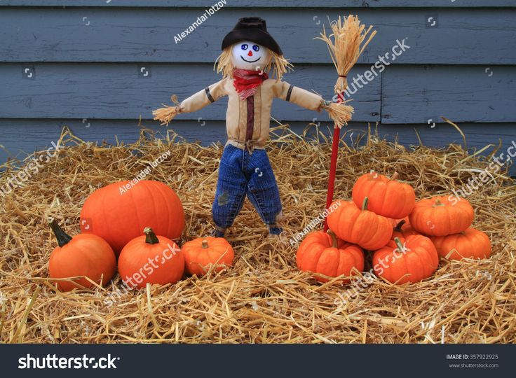 Thanksgiving harvest and autumn decoration. Scarecrow guarding the harvested pumpkins on piles over hay