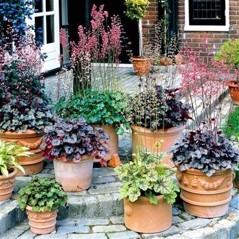 BulbsDirect   Your Online Garden Center For Flower Bulbs And Perennial  Plants Direct From Holland