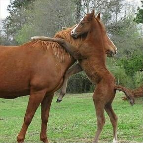 Here is another cute horse pic. This shows you how they get up there for those perfect cute pictures.. Love is so awesome!! Thank you Father for such a great world, and a much better one to come soon with out anymore war. God bless us all!..4∞