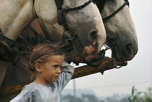young amish girl holding back two huge draft horses.