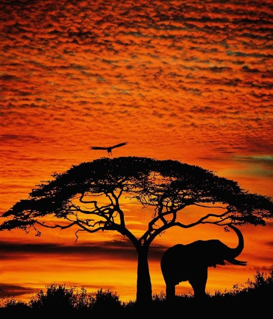 sunsetting in the animal kingdom elephants hold my