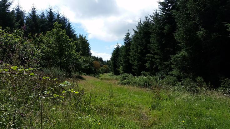 Summer at Smitham Chimney & East Harptree Wood, Mendip Hills AONB, Somerset. #MTB #MendipHills #Woodland #Photography