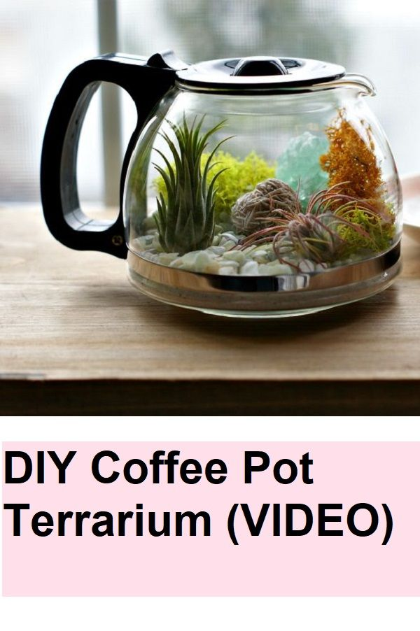 Diy Coffee Pot Terrarium Video Diy Pinterest Diy Terrarium
