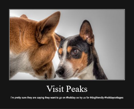 Dog friendly holiday cottages Peak District up to five dogs welcome.  These dogs want to come again!