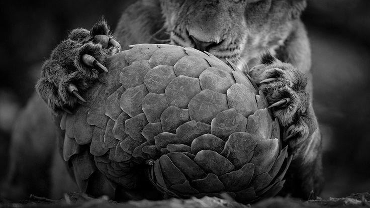 Finalistas de fotografia da vida selvagem 2016