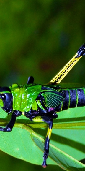 #awesome #dragonfly