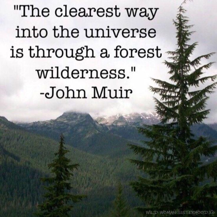 The clearest way into the universe is through a forest wilderness - John Muir. WILD WOMAN SISTERHOODॐ #WildWomanSisterhood #nature #wildwomanmedicine #EmbodyYourWildNature