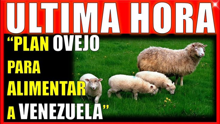 ATENCIÓN! EN MARCHA PLAN OVEJO  Noticias ultima hora venezuela hoy 27 de septiembre #venezuela