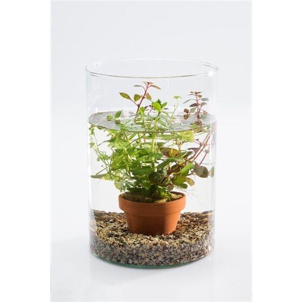 Vijvervaas cilinder aquariumplant (20650) - FloraXchange