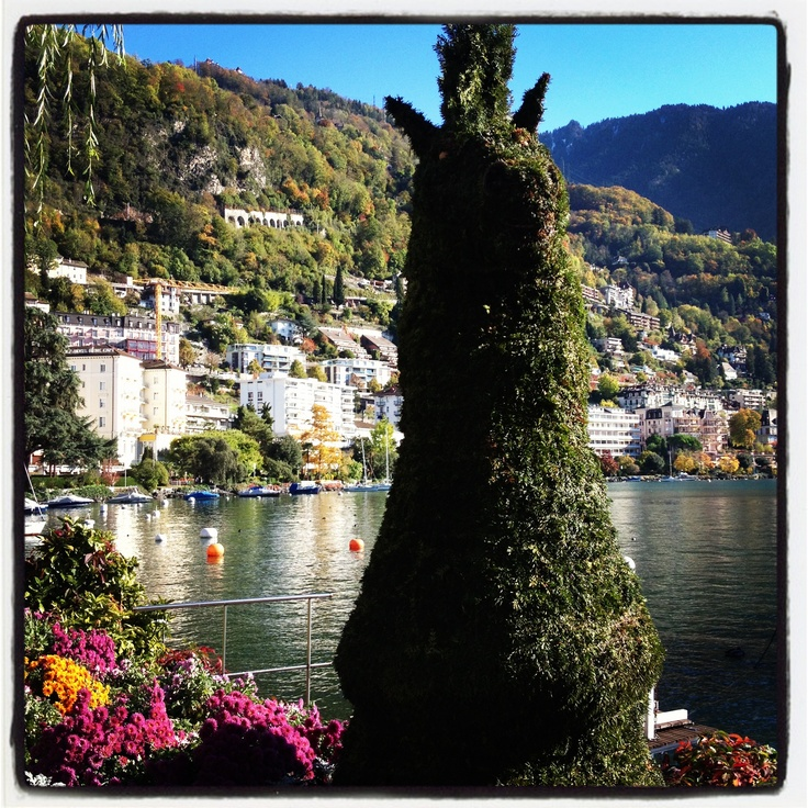The Knight - chess piece in Montreux Riviera  #artistic #art #nature