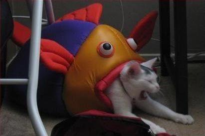 A cara deste gato quando enfrentou seu pior pesadelo.