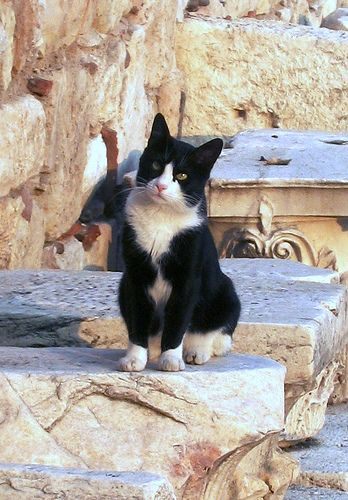 https://flic.kr/p/4zLcLX | Very Photogenic cat - Athens Greece | Taken during a short visit to Athens in October 2007