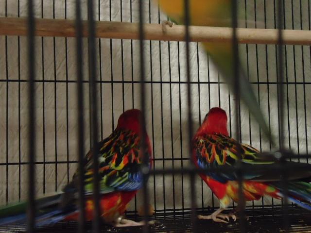 Expo de animales exoticos Fiesta Inn, México D.F
