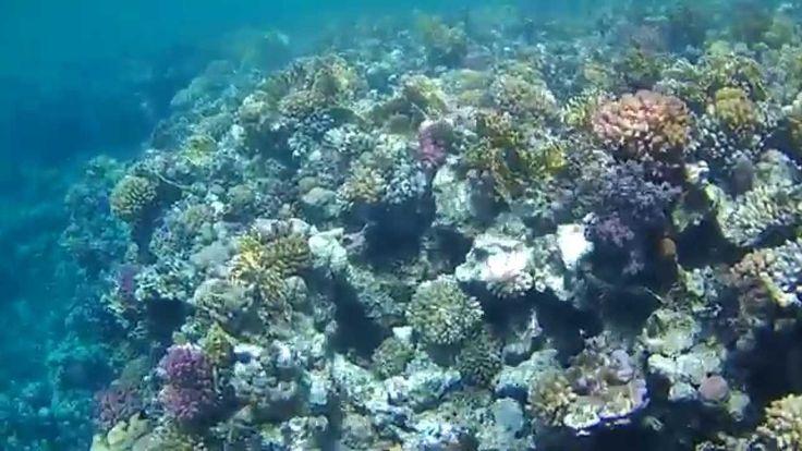 beautiful reef Denver ACT-5002