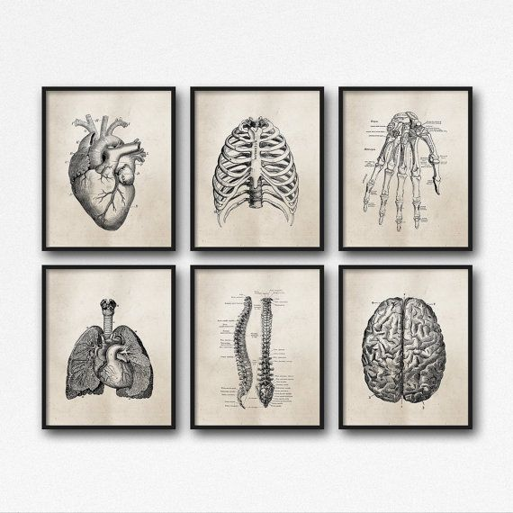 "Set of Six (6) Art Prints - 8X10"" or 11X14"" - Science Anatomy Wall Art - Neutral Vintage Effect - Medical Student Gift - Office - SKU:892"