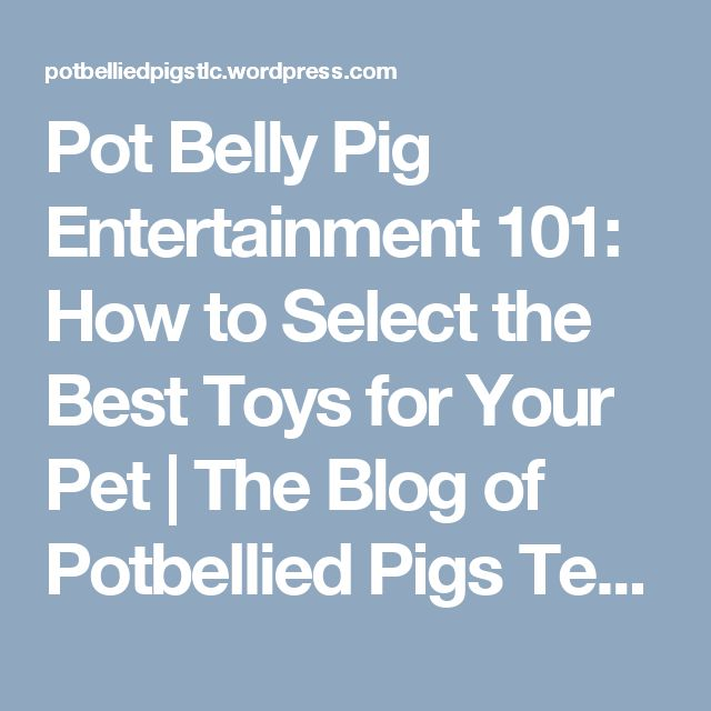 Pot Belly Pig Entertainment 101: How to Select the Best Toys for Your Pet | The Blog of Potbellied Pigs Tender Loving Care