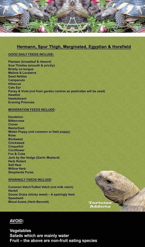 Food List For Sulcata Tortoise
