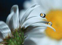 Чудеса макросъемки — целый мир в каплях дождя