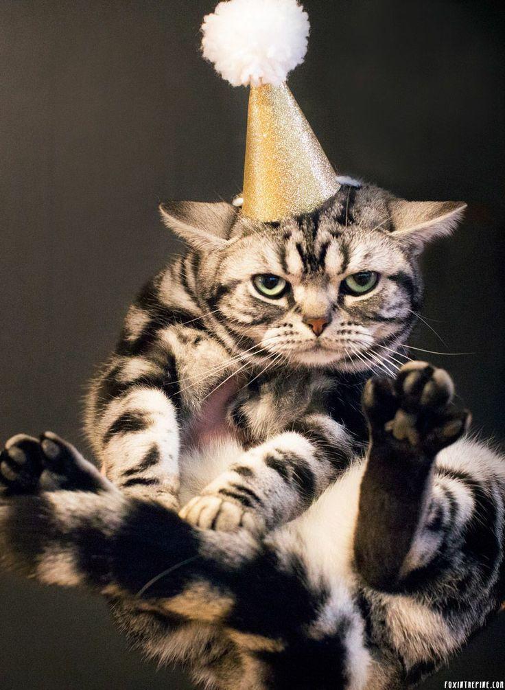 57 Best Birthday Memes Images On Pinterest Birthday