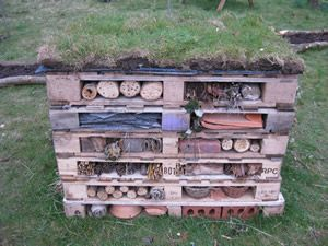 lets get AW and sol building a bug hotel, not sure misty and lily will be bothered!