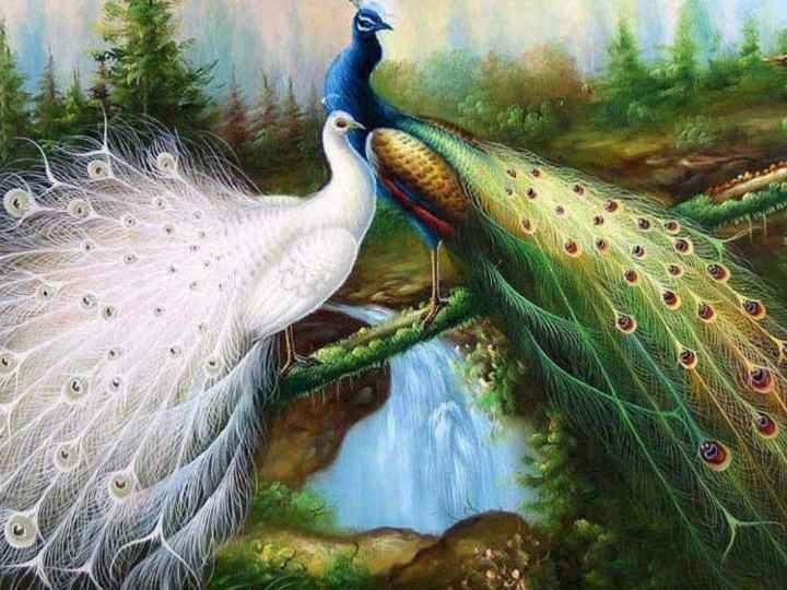 336 best peacock images on pinterest