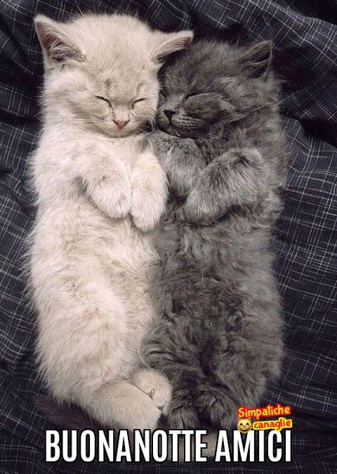 Buonanotte Amici Buonanotte Animali Gatti E Uomini