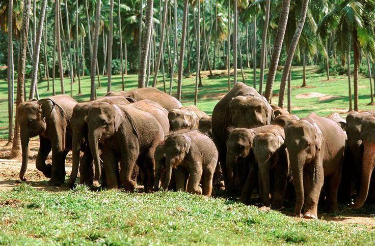 Ga mee op reis langs de meest aansprekende natuurlijke, culturele en historische hoogtepunten van Sri Lanka. Tijdens deze reis bezoekt u het prachtige culturele erfgoed en maakt u bijzondere tochten door het groene binnenland. Eén van de hoogtepunten van deze reis is de treinreis naar Bandarawela, u komt ogen en oren te kort om alle indrukken in u op te nemen. Een zeer diverse rondreis met klassieke highlights én Nederlandstalige reisbegeleiding met aan het einde nog een paar heerlijke…