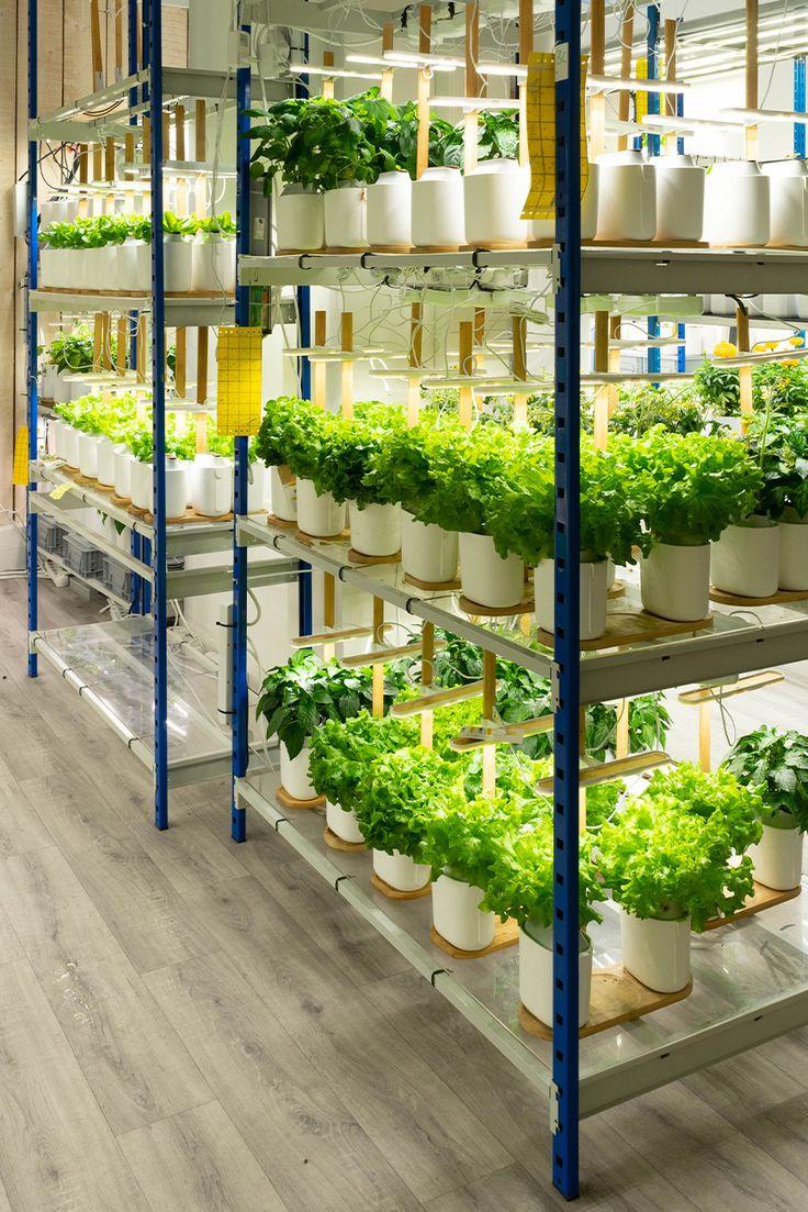 Kit de rempotage | Potager intérieur, Potager, Cultiver des herbes