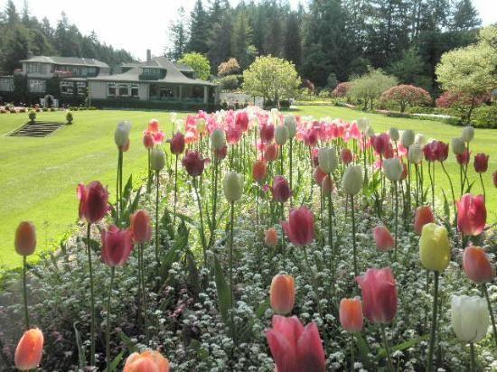Butchart Gardens: And More Tulips! #butchartgardens #flowers #tulips #spring