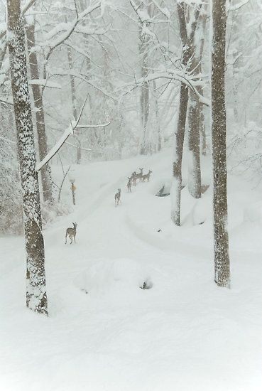 ♕ Herd of Deer on a Snowy Day by Jean Meile