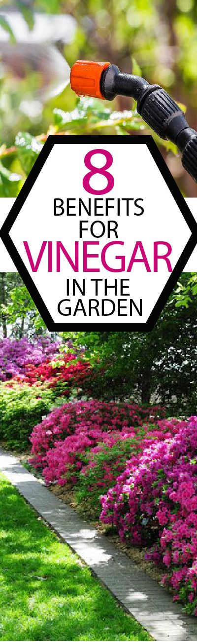 Vinegar is all the rage, find out what works and what doesn't work in your garden!