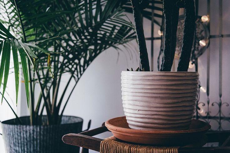 die besten 25 kakteen pflege ideen auf pinterest zimmer sukkulenten garden care und kakteen. Black Bedroom Furniture Sets. Home Design Ideas